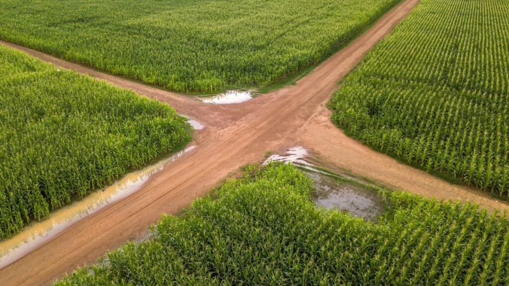 Los alimentos transgénicos han sido una gran solución para la industria alimentaria.