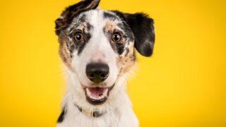 Perros famosos en internet (y con más influencia que tú).