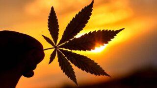 Regulación de cannabis: ¿en dónde estamos entonces?