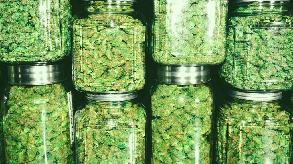¿Qué es la cannabis?
