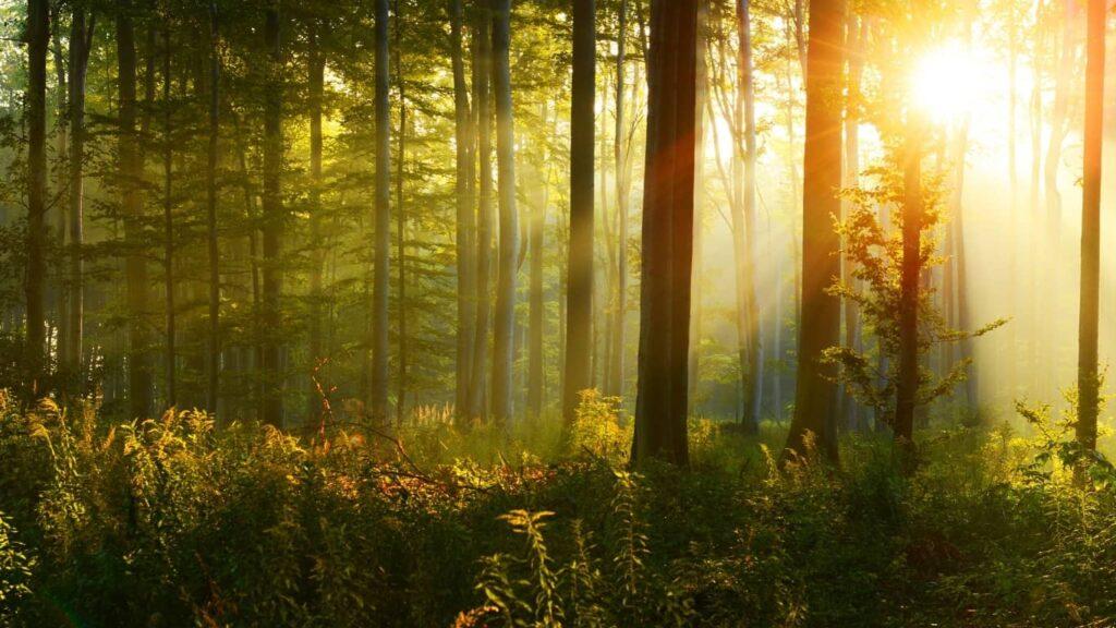 Qué hermoso sería el bosque de las ánimas.