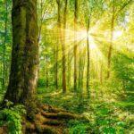 El bosque de las ánimas, un lugar hermoso y lleno de vida