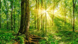 El bosque de las ánimas, un lugar hermoso y lleno de vida.