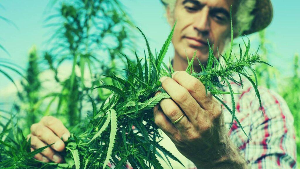 ¿Cuándo comenzó la prohibición de la marihuana?