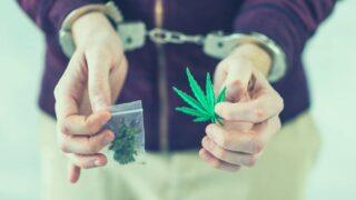 Prohibición de la marihuana: Negocio y prejuicio detrás de la exclusión