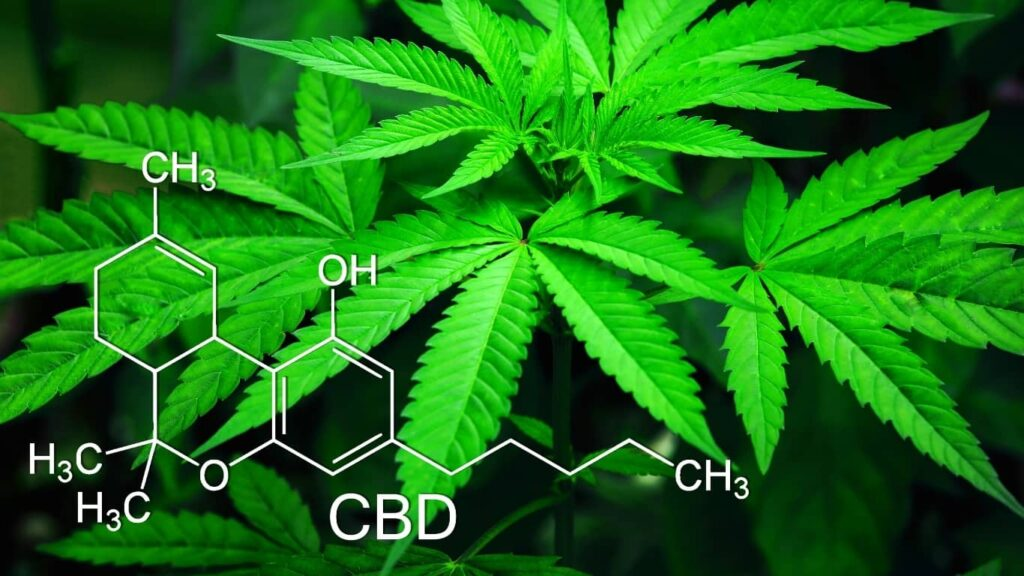 Se publicó en el Diario Oficial de la Federación el Reglamento para Cannabis Medicinal en México.