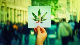 Reglamento para cannabis medicinal en México. ¡Ya lo tenemos!