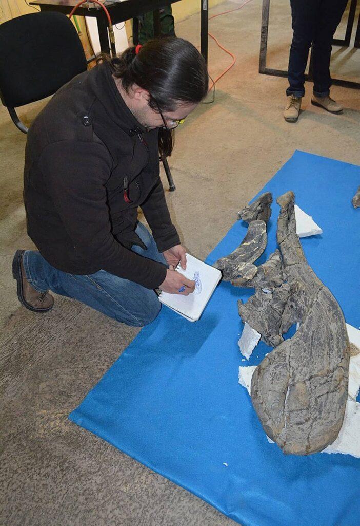 Maestro Ángel Alejandro Ramírez Velasco, analizando un cráneo de la nueva especie de dinosaurio descubierta.