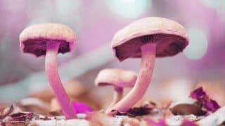 Cómo se clasifican los hongos y cómo ayudan a las plantas