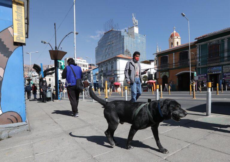Don Alonso, el perro que viaja solo en el transporte público