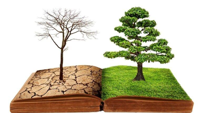 El ser humano, su relación con medio el ambiente y los recursos naturales