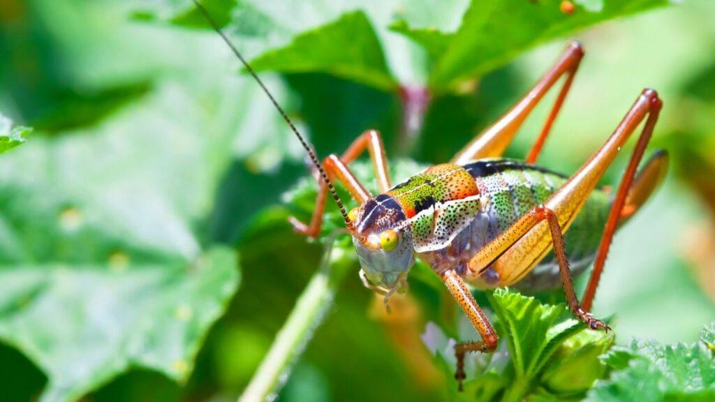 Se ha comprobado la utilidad de insectos comestibles para nuevas harinas en la industria alimentaria.